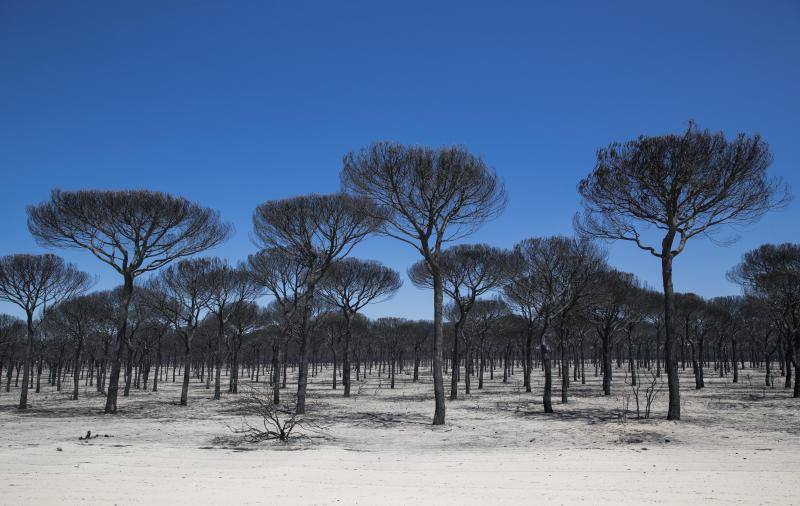 Doñana fire - in pictures