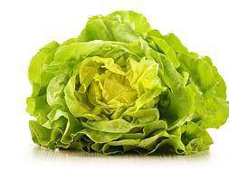 Lettuce, the queen of salads