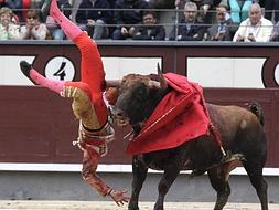 Malaga bullfighter gored in Madrid on road to recovery