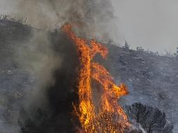 Fire in the Montes de Malaga lays waste to 260 hectares of pine forest and scrub