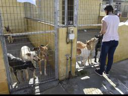 Malaga sets itself 2019 target to stop putting down abandoned animals