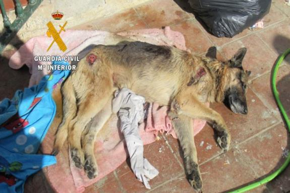 Down Pillows Animal Cruelty : 38 dogs rescued in Axarquia-wide operation against animal cruelty . surinenglish.com